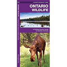 Ontario Wildlife: A Folding Pocket Guide to Familiar Animals