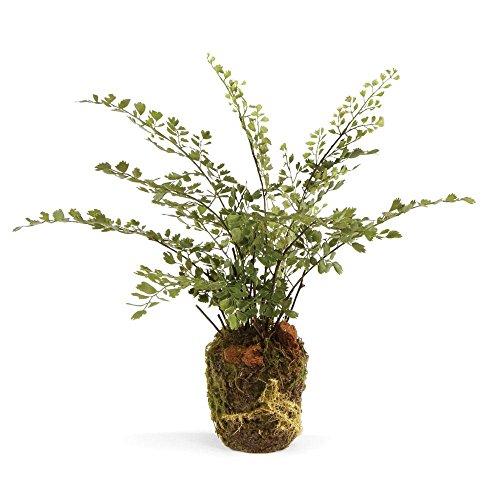 Fern Like Plants - 1