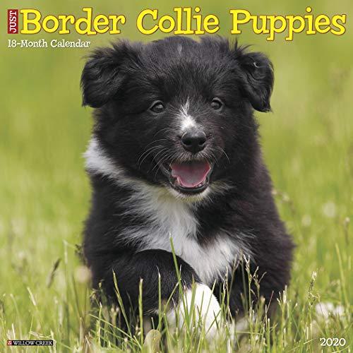 Just Border Collie Puppies 2020 Wall Calendar (Dog Breed Calendar)