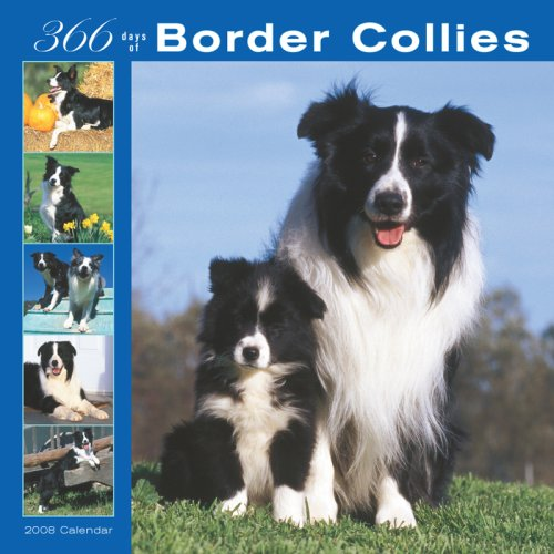 Border Collies 366 Days 2008 Square Wall Calendar (German, French, Spanish and English Edition)