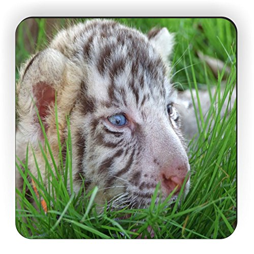 Rikki Knight Baby White Tiger in Grass with Bright Blue Eyes Design Square Fridge (Tiger Eyes Magnet)