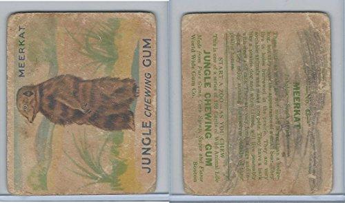R78 World Wide Gum, Jungle Gum, 1930, 43 -