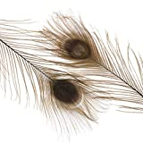 Zucker Feather Place Peacock Eyes Bleached/Dyed - Brown