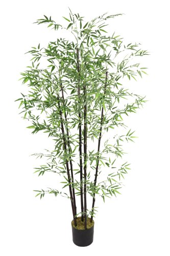 Laura Ashley 6 Foot Tall Bamboo Tree with Black Poles by Laura Ashley