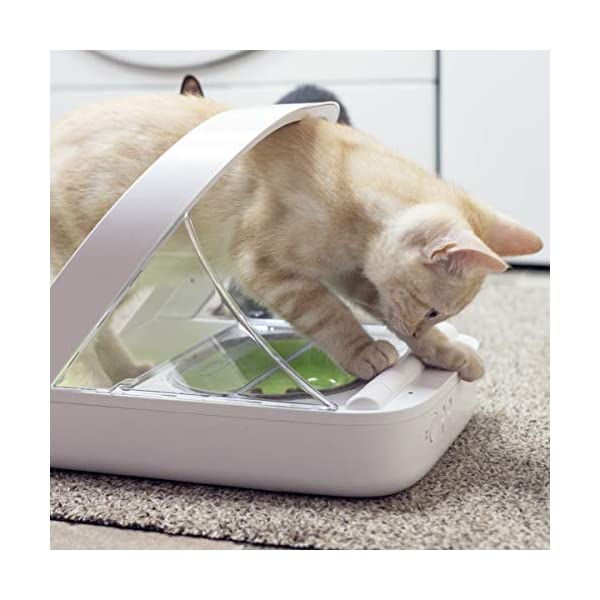 SureFeed Microchip Pet Feeder, White (4 x C Batteries Required) 4