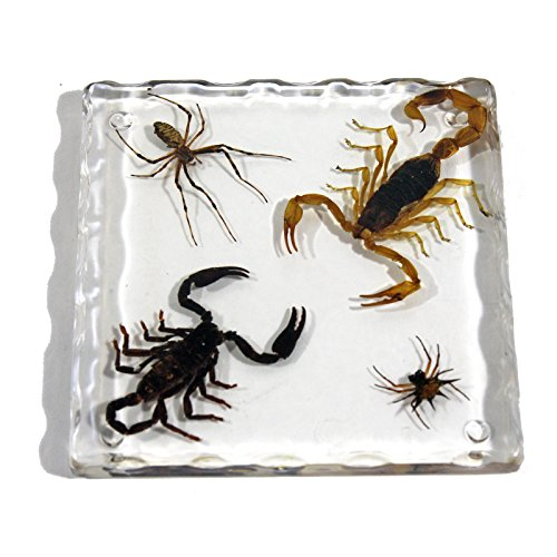 REALBUG Resin Coaster with Golden Scorpion, Black Scorpion Spider & Spiny Spider (Scorpion In Resin compare prices)