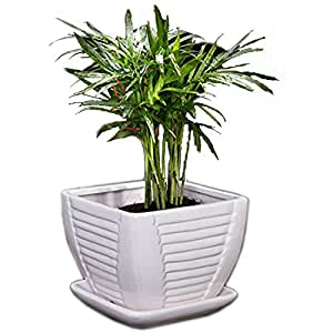 Amazon Com White Ceramic Flower Pot Plant Pot Square