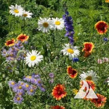 Outsidepride Mountain Wildflower Seed Mix - 5 LB