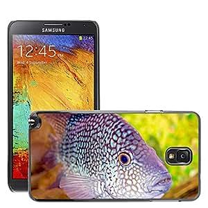 Hot Style Cell Phone PC Hard Case Cover // M00046449 animals aquarium sea fish // Samsung Galaxy NOTE 3