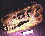 Dinosaur Large Tyrannosaurus Rex (Skull Model)