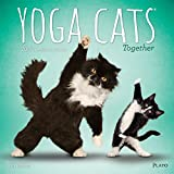 Yoga Cats Together 2019 12 x 12 Inch Monthly Square Wall Calendar by Plato, Animals Humor Cat
