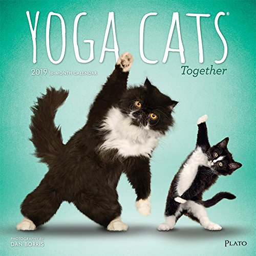(Yoga Cats Together 2019 12 x 12 Inch Monthly Square Wall Calendar by Plato, Animals Humor Cat)