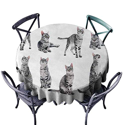 HCCJLCKS Washable Table Cloth Cat Collage of a Cute Inquisitive Striped Shorthair Furry Playful Pussy Posing Art Print Picnic D51 Grey White