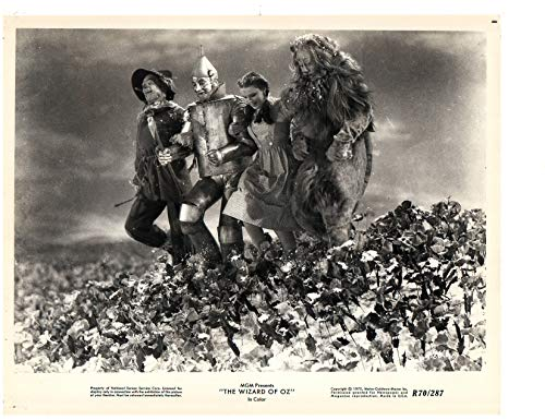 THE WIZARD OF OZ (1939) Judy Garland / Ray Bolger, an original MGM photograph from the 1970 release oft he film shows Judy Garland with Ray Bolger, Jack Haley, Bert Lahr and toto, nice image escaping the deadly poppy fields, Photograph measure 8