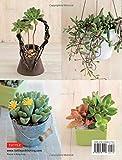 A Beginner's Guide to Succulent Gardening: A