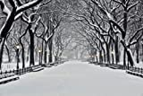 """Central Park in Winter - 72""""W x 48""""H - Peel and Stick Wall Decal by Wallmonkeys"""