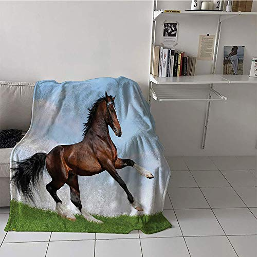 Khaki home Children's Blanket Lightweight Plush Throw Blanket (50 by 70 Inch,Horses,Bay Horse Pacing on The Grass Energetic Noble Character of The Nature Concept,Blue Green Brown