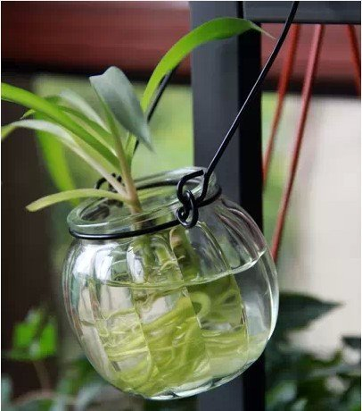 Amazon Mooncloud Creative Pumpkin Style Hanging Glass Vase