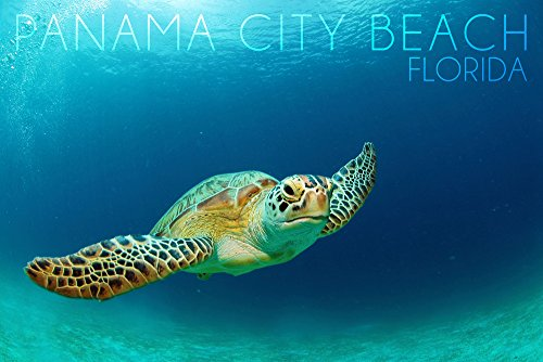 Panama City Beach, Florida - Sea Turtle Collectible Giclee Gallery Print, Wall Decor Travel