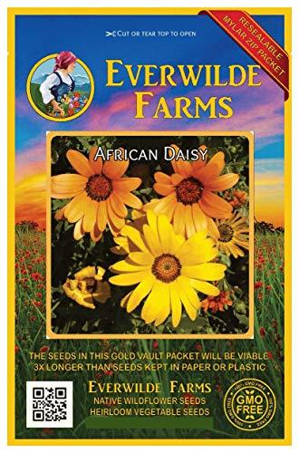Everwilde Farms - 1000 African Daisy Wildflower Seeds - Gold Vault Jumbo Seed Packet -
