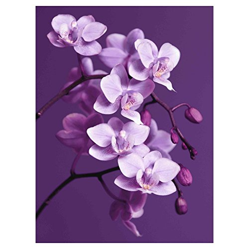 Purple Orchid Canvas Wall Art - 24W x 32H in.