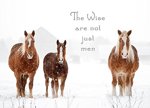 The Wise are not just Men Belgian Horse Christmas Cards (Horse Cards Xmas)