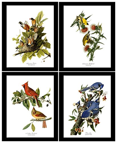 Bird Prints Art by James Audubon. Matched Set of 4 Vintage Wall Decor Reproductions. Artwork in 5x7 8x10 11x14 ()