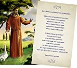 Personalized Funeral Service Prayer Cards (Pack of 50) (St. Francis - Preprinted)