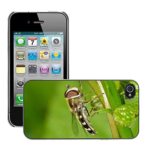 Bild Hart Handy Schwarz Schutz Case Cover Schale Etui // M00135100 Insekten Diptera Späte // Apple iPhone 4 4S 4G