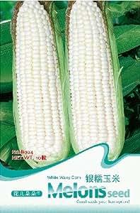 Frutas y hortalizas semillas de cola de plata de la semilla de maíz ceroso blanco Baogu maíz 10 PC / bolso semillas embalaje original para su hogar