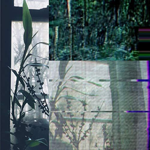 rainforest computer game