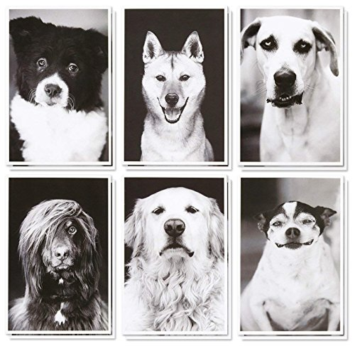 (36 Pack Blank Note Cards Bulk Box Set - Assorted All Occasion Real Photograph Rescue Dogs - White Paper Envelopes Included 4 x 6 Inches)
