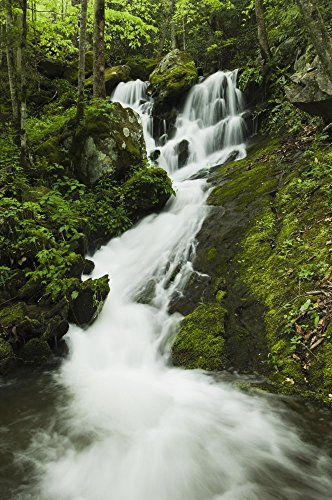 Posterazzi Tennessee United States Of America; Spring Foliage And A Seasonal Waterfall In The Smoky Mountains National Park Poster Print (24 x 38) (Best Waterfalls In Tennessee)