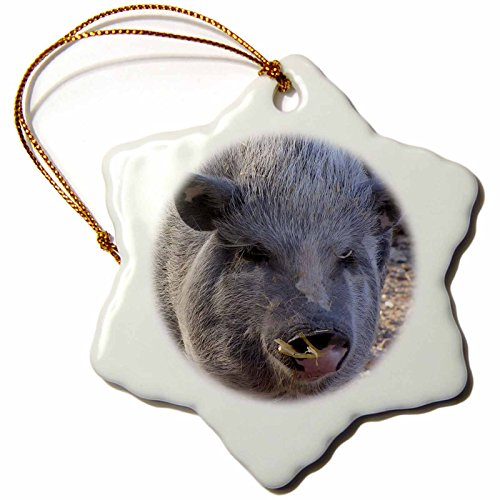 3dRose LLC orn_21065_1 Pot Belly Pig Snowflake Porcelain Hanging Ornament, 3-Inch
