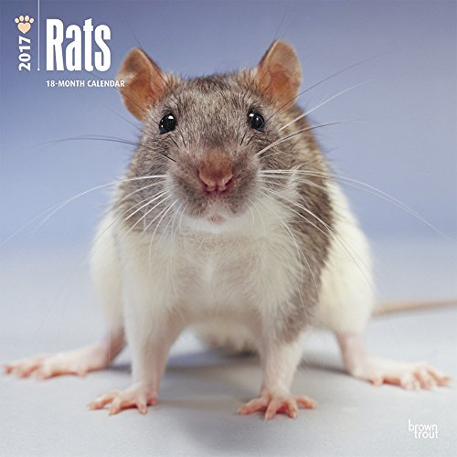 2017 Monthly Wall Calendar - Rats