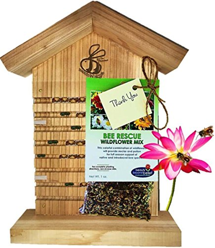 Mason Bee House for Solitary Bees - BONUS Viewing Window, Wildflower Seeds, Guide - Wooden Beeblock Bee Home Nest to Attract Wild Native Orchard Mason Bees, Leafcutter Bees to Garden - Card Nectar My