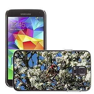 Etui Housse Coque de Protection Cover Rigide pour // M00135637 Jilguero del árbol del pájaro Flores de // Samsung Galaxy S5 S V SV i9600 (Not Fits S5 ACTIVE)