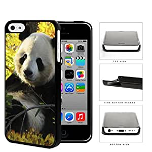 Cute Baby Panda In The Field Hard Plastic Snap On Cell Phone Case Apple iPhone 5c