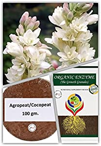 Rajnighandha / Tube Rose Flower bulbs (15bulbs) and Agropeat/ Cocopeat For good germination (100gm) And Organic Granule  Enzyme (250gm) for strong roots of flower bulbs by Kraft Seeds