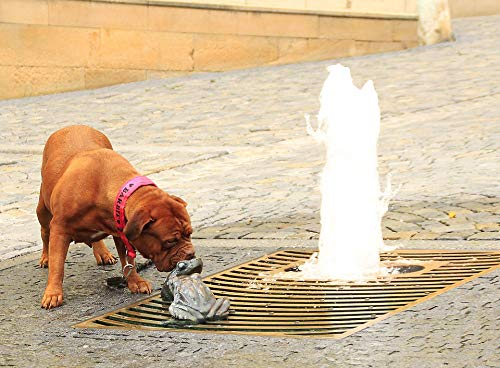 Home Comforts Peel-n-Stick Poster of Two De Bordeaux Pet Mastiffs Street Dogue French Vivid Imagery Poster 24 x 16 Adhesive Sticker Poster - Sticker Bordeaux Dogue De