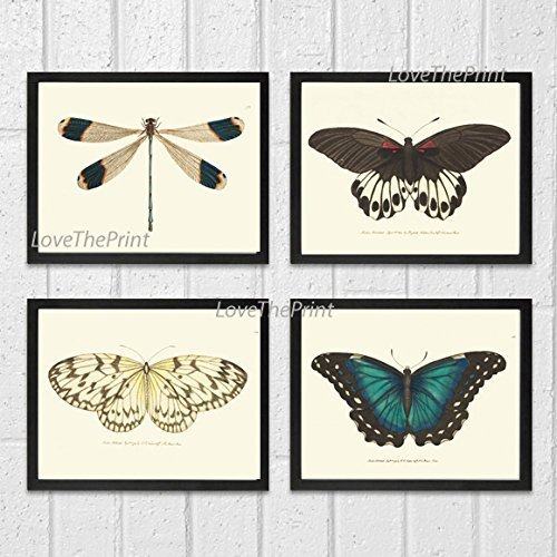 Butterfly Print Set of 4 Prints Antique Art Beautiful Colored Colorful Natural Science Summer Garden Nature Home Room Wall Decor Unframed (Butterfly Garden Framed Print)