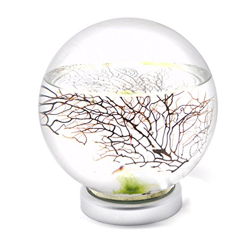 EcoSphere Closed Aquatic Ecosystem Large Sphere with LED Base