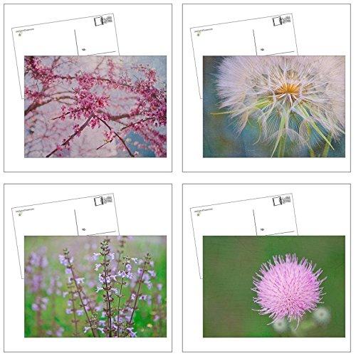Blossoms Postcard (Set of 4 Postcards With Envelopes Dandelion Cherry Blossom Art Prints)