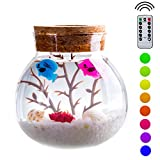 PROLOSO Wireless Micro-landscape Bottle Lights Aquarium Kit - Creative Stylish Romantic DIY Sensory Toys and Decoration - Fish Series