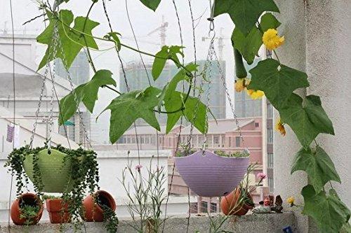 3/pcs Nicebuty 3/pcs Cha/îne de suspension Pot de fleurs Int/érieur ou ext/érieur Panier Fleur Pot de fleurs Pot de fleurs couleur al/éatoire
