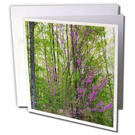 3dRose TDSwhite - Spring Seasonal Nature Photos - Early Spring Lilac Branches - 1 Greeting Card with Envelope (gc_284255_5)