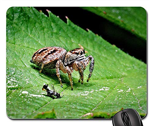 Mouse Pad - Spider Victim Macro Insect Nature Closeup Green]()