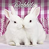 Rabbit Calendar - Cute Animal Calendar - Calendars 2018 - 2019 Wall Calendars - Animal Calendar - Rabbits 16 Month Wall Calendar by Avonside