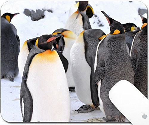 Asahiyama Zoo (Luxlady Gaming Mousepad 9.25in X 7.25in IMAGE: 26964068 King Penguin Colony at the Asahiyama Zoo Japan)