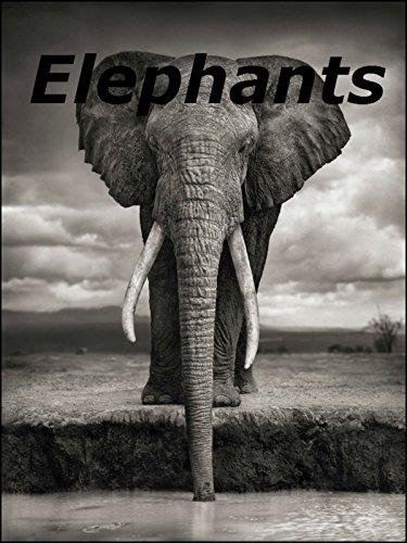 (Elephants)